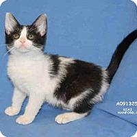 Adopt A Pet :: *SERENA - Hanford, CA