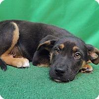 Adopt A Pet :: Lenny - San Diego, CA