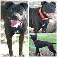 Adopt A Pet :: 29290 - Midwest City, OK