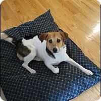 Adopt A Pet :: Travis - Providence, RI