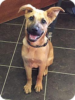 German Shepherd Dog Mix Puppy for adoption in Baytown, Texas - Adopt Me!