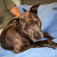 Adopt A Pet :: Coral - Palm Springs, CA