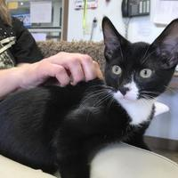 Adopt A Pet :: Leonard - Madison, WI