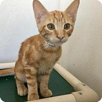 Adopt A Pet :: *MONKEY - Visalia, CA