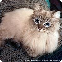 Adopt A Pet :: Stella Bella - Delmont, PA