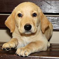 Adopt A Pet :: Moireen - Southbury, CT