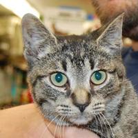 Adopt A Pet :: Horchata - Brooklyn, NY