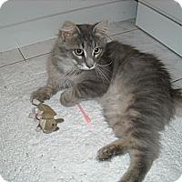 Adopt A Pet :: Grainger - Arlington, VA