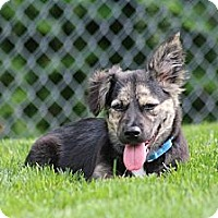 Adopt A Pet :: Skye - Hastings, NY