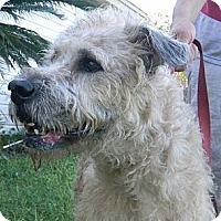 Adopt A Pet :: Madeline - Jacksonville, FL