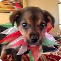 Adopt A Pet :: Bambi - Marlton, NJ