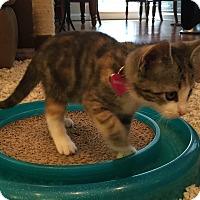 Adopt A Pet :: Willow - Birmingham, AL