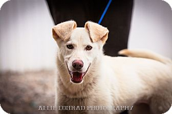 Shepherd (Unknown Type) Mix Dog for adoption in Southern Pines, North Carolina - Cheyenne