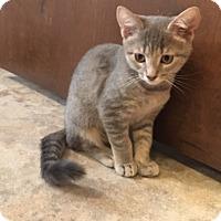Adopt A Pet :: Itsy - Colmar, PA
