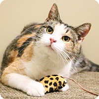 Adopt A Pet :: Eve - Chicago, IL