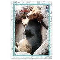 Adopt A Pet :: APRIL - Ventnor City, NJ