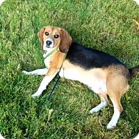 Adopt A Pet :: Gerry - cicero, NY