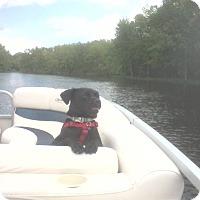 Adopt A Pet :: Arlo *FOSTER* - Appleton, WI