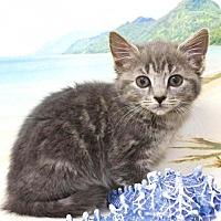 Adopt A Pet :: Fiora - Harrisonburg, VA