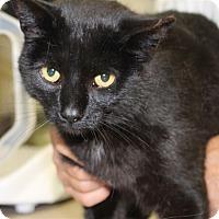 Adopt A Pet :: Jimi - Salisbury, MD