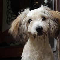 Adopt A Pet :: Chester - Zaleski, OH
