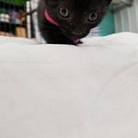 Adopt A Pet :: Acoma - Princeton, MN