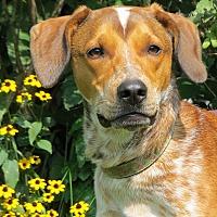 Adopt A Pet :: Jody-URGENT - Wood Dale, IL