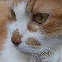 Adopt A Pet :: Sunny OJ MC - Woodland Park, NJ