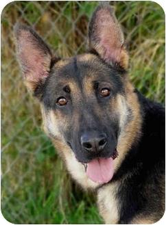 German Shepherd Dog Dog for adoption in Los Angeles, California - Greta von Gunnerson
