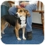 "Photo 3 - Beagle Mix Dog for adoption in MARION, Virginia - ""Holly"""