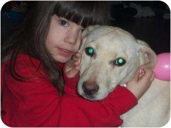 Labrador Retriever Mix Puppy for adoption in Williston, Vermont - Cami