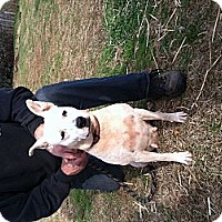 Adopt A Pet :: Livvy - Blanchard, OK
