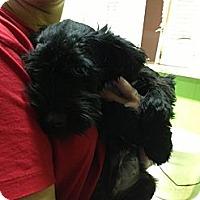 Adopt A Pet :: Harvey 2 - PENDING, in ME - kennebunkport, ME