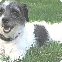 Adopt A Pet :: Chrissie - Croton, NY