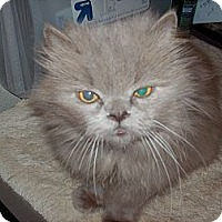 Adopt A Pet :: Mr.Tuffy - NEWCASTLE, CA