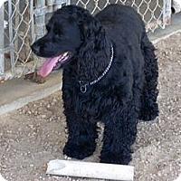 Adopt A Pet :: Black Magic - Southampton, PA