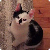 Adopt A Pet :: Pierre (dog friendly) - Sterling Hgts, MI