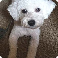 Adopt A Pet :: FIONA - Mission Viejo, CA
