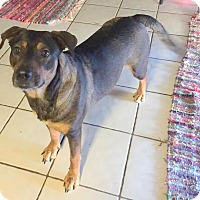 Adopt A Pet :: Merry - Miami, FL