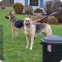 Adopt A Pet :: Bonnie - ROME, NY