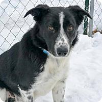 Adopt A Pet :: Mister - Meridian, ID