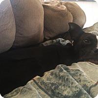 Adopt A Pet :: Star - Charlotte, NC