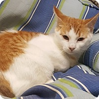 Adopt A Pet :: Mango - Americus, GA
