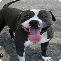Adopt A Pet :: LEO - Santa Maria, CA