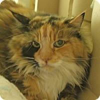 Adopt A Pet :: Sophie - Walnut Creek, CA