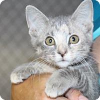 Adopt A Pet :: Addison - Columbia, TN