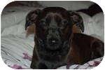 Dachshund/Pug Mix Dog for adoption in Plainfield, Illinois - Audi