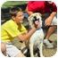 Photo 3 - Husky/Labrador Retriever Mix Dog for adoption in Westport, Connecticut - *Frank - PENDING