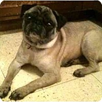 Adopt A Pet :: Rosie-NY - Edmeston, NY