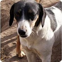 Adopt A Pet :: Roof Top Sally - Glenpool, OK
